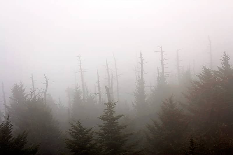 Clingmans-Dome-Hike-10