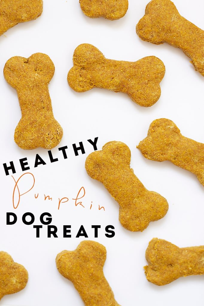 Healthy-Pumpkin-Dog-Treats-19