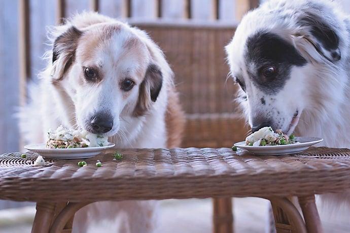 Fish Dog Meal 16