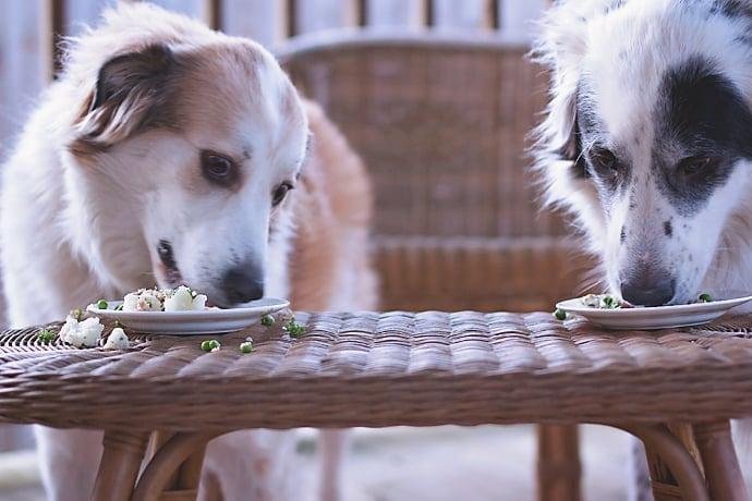 Fish Dog Meal 18