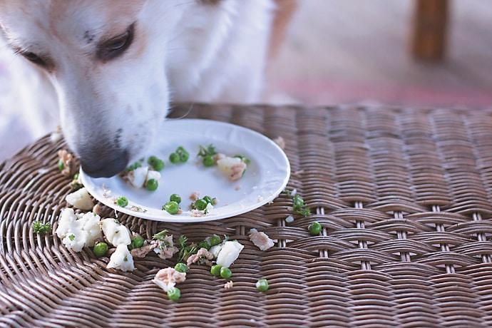 Fish Dog Meal 19