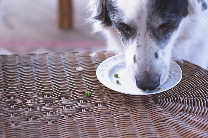Fish Dog Meal 20