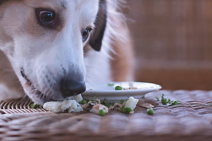 Fish Dog Meal 22