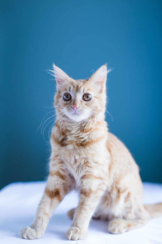 kitten in photos-14