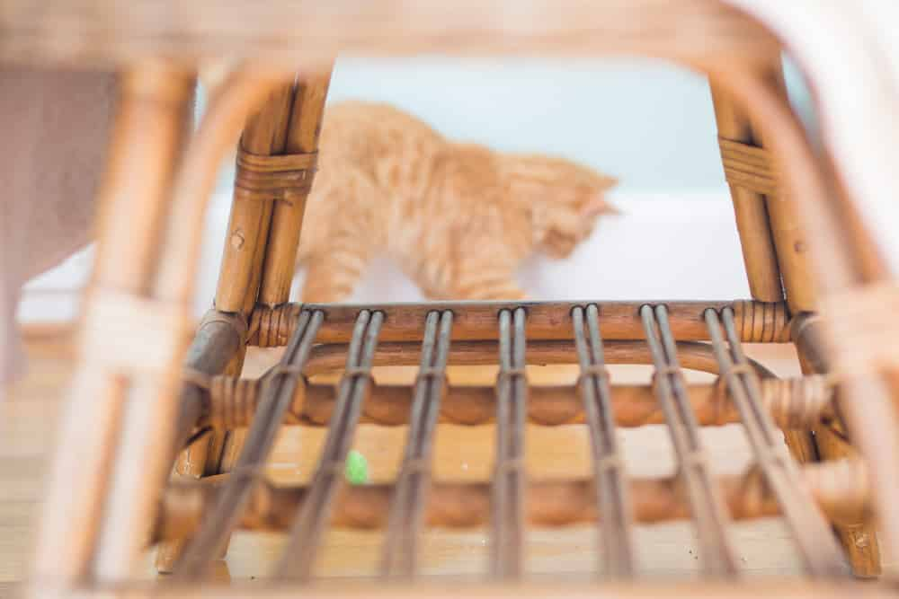 kitten in photos-4