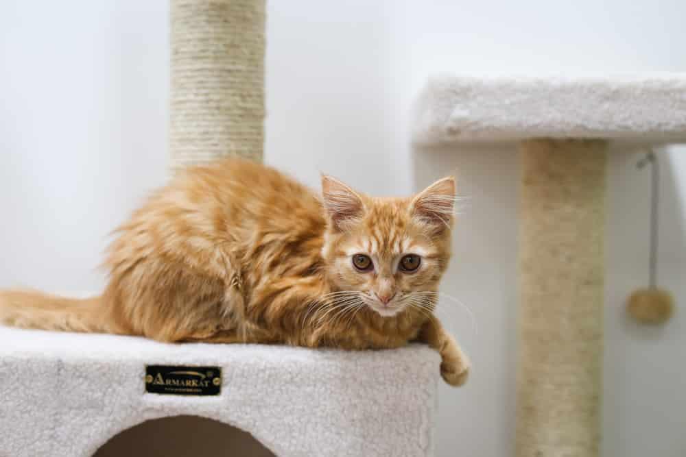kitten in photos-8
